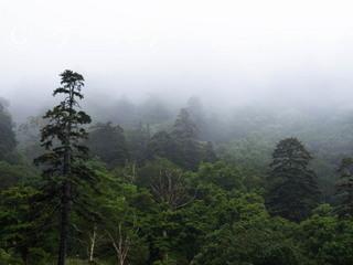 2 縮小 2014年9月5日 霧と雨の日.jpg