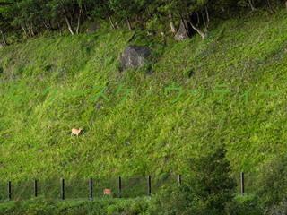 4 縮小 2014年9月5日 カムイワッカ湯の滝周辺.jpg