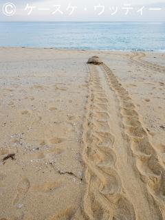 Ⓒ 縮小 2017年5月12日 鹿児島県 屋久島 いなか浜 アカウミガメ  5.jpg