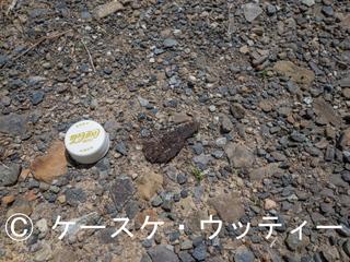 Ⓒ 縮小 ブ 2017年5月8日 長崎県 対馬 (フィールドサイン).jpg