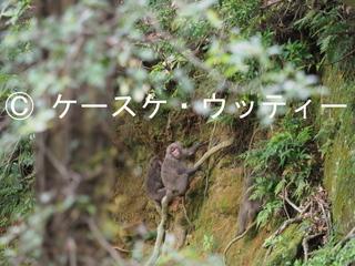 Ⓒ 縮小 ヤクザル (3).jpg