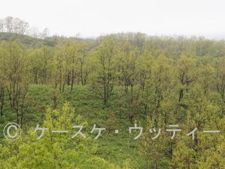 Ⓒ 縮小 ブ 2017年5月10日 霧の阿蘇ミルクロード付近(熊本県) (1).jpg