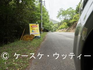 Ⓒ 縮小 ブ 2017年5月8日 長崎県 対馬 (ツシマヤマネコ看板).jpg