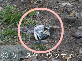 〇印 トリミング 縮小 2016年11月12日  残骸.jpg