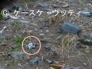 〇印 縮小 2016年11月12日  残骸.jpg