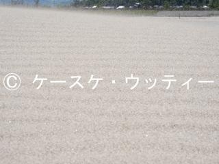 ブ 縮小 2017年5月4日 【風紋を作る風】 鳥取砂丘.jpg