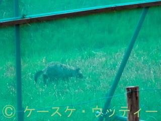 縮小 2016年11月27日 タヌキだ!.jpg