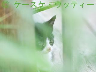 縮小  2016年10月8日 目の見えない野良ネコ  1.jpg
