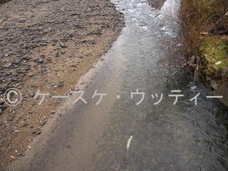 縮小 2016年11月12日 サケの終わり.jpg