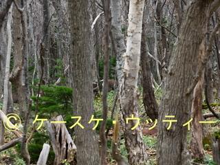 縮小 2016年11月13日 エゾシカ 森の中を移動.jpg
