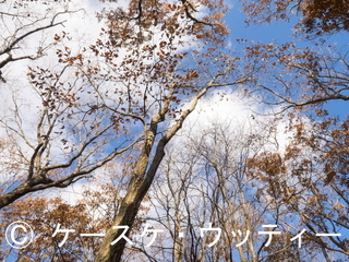 縮小 2016年11月16日 ウトナイ湖畔の森.jpg