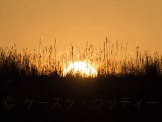 縮小 2017年元旦 初日の出.jpg