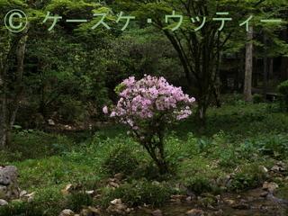 縮小 ブ 2017年5月7日 緑に生えるピンク色.jpg